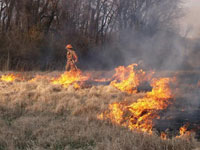 grass_fire_001_thumb